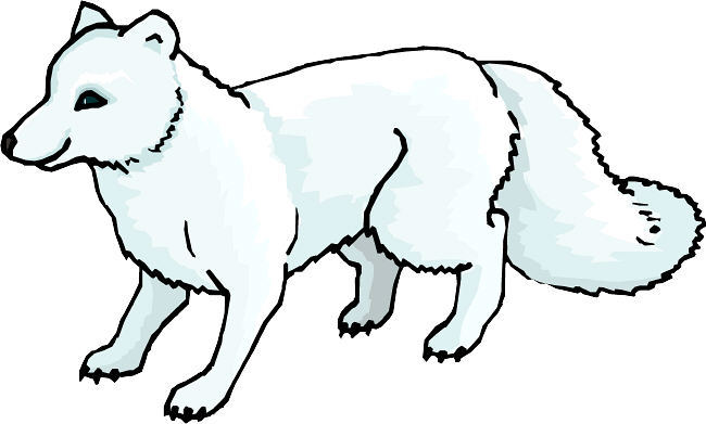 Fox clipart arctic fox, Fox arctic fox Transparent FREE for.
