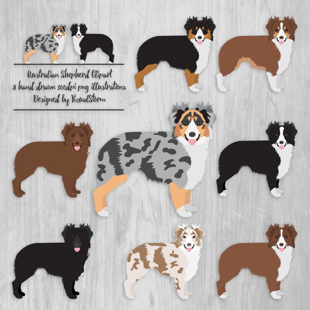 Australian Shepherd Clipart Aussie Illustrations Ranch Dogs.