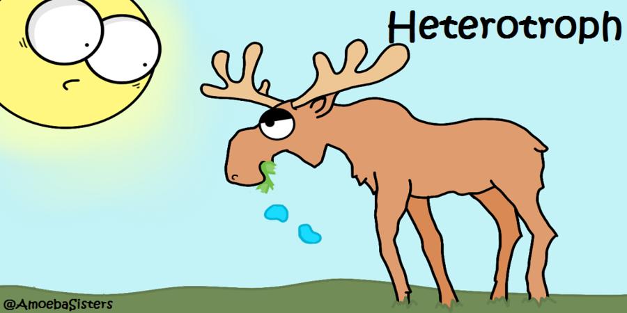 Cartoon Grass clipart.