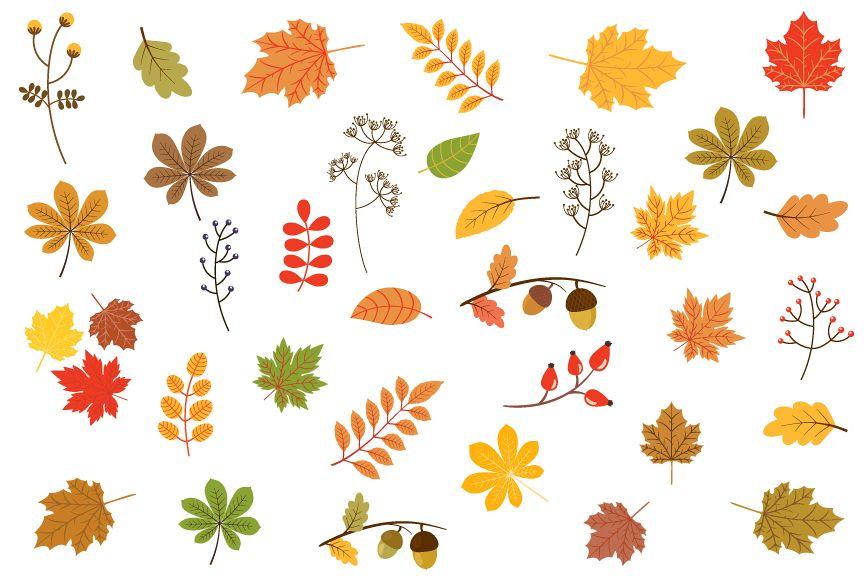 Autumn leaves clipart, Fall foliage clip art set.