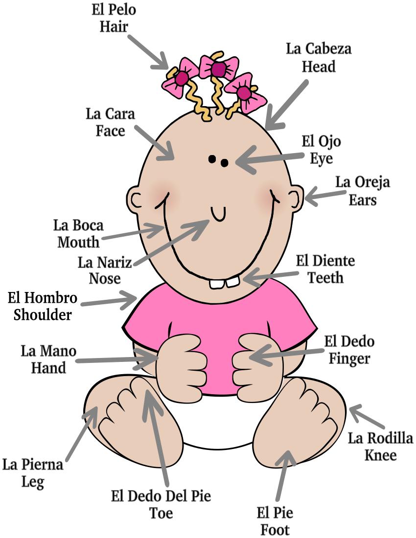 Infants Body Parts Clipart.