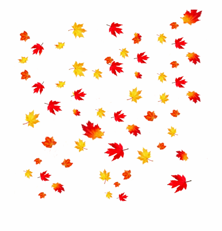 Transparent Background Falling Leaves , Png Download.