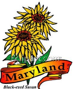 maryland state flower.