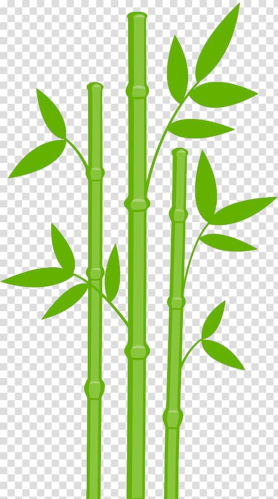 Green leafed bamboo plant , Giant panda Bamboo , Bamboo.