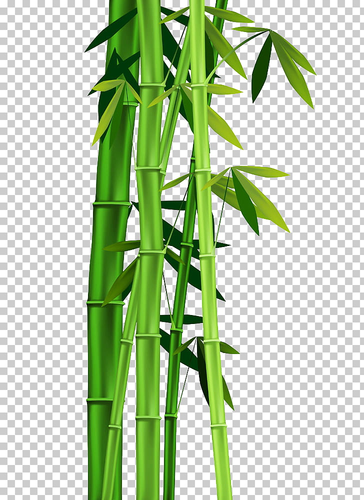 Bamboo , Bamboo leaves, green bamboo PNG clipart.