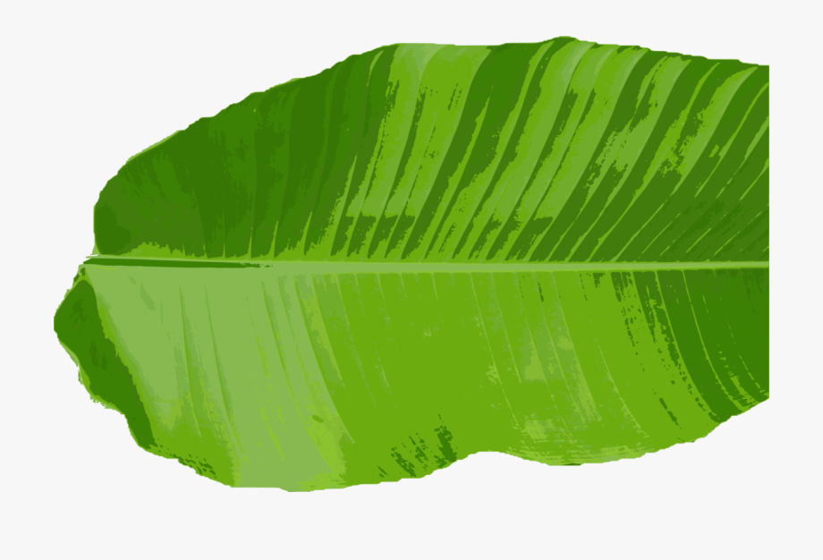 Green Leaves Clipart Different Kind Leaves.