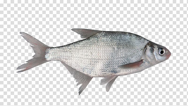 Milkfish Fish scale , fish transparent background PNG.