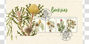 Banksia transparent background PNG cliparts free download.