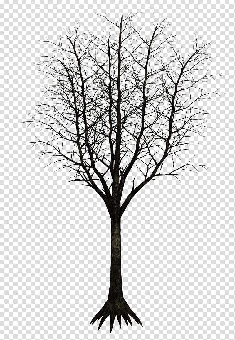 Dark Trees , bare tree transparent background PNG clipart.