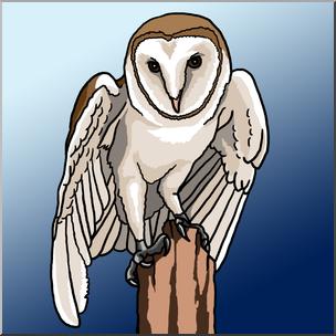 Clip Art: Barn Owl Color 1 I abcteach.com.