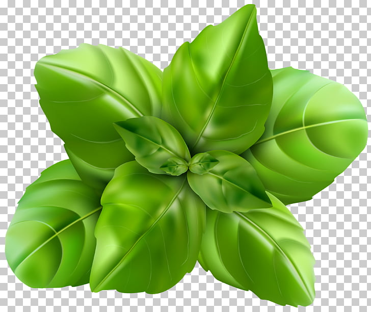 Holy Basil Herb , Herbs PNG clipart.