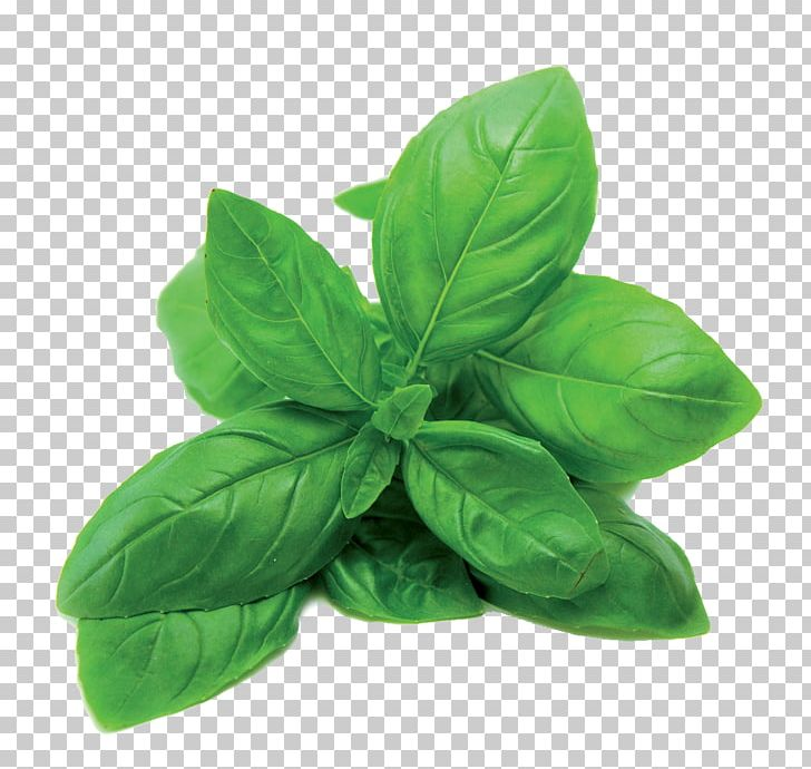 Thai Basil Herb Pizza Spice PNG, Clipart #610973.