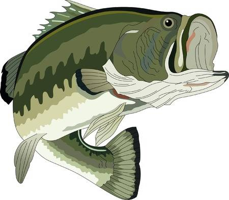 Bass clipart fish 4 » Clipart Station.