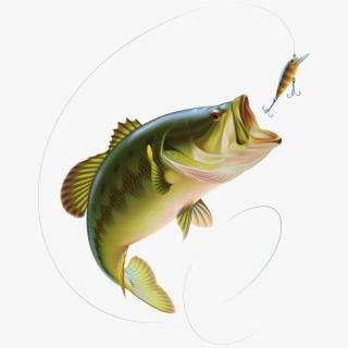 Bass Fishing Largemouth Bass Clip Art.