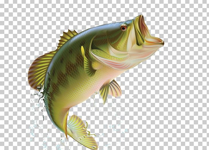 Largemouth Bass Bass Fishing Sunfishes PNG, Clipart, Bass.