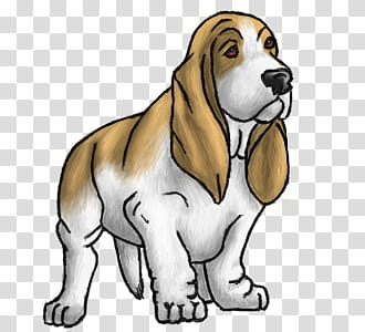 Basset Hound, white and brown basset hound illustration.