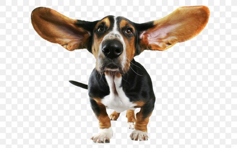 Basset Hound Beagle Bloodhound Papillon Dog Chihuahua, PNG.