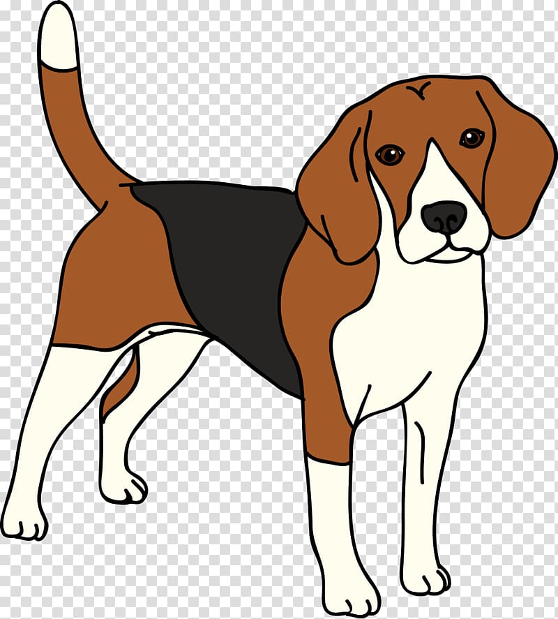 Beagle English Foxhound American Foxhound Harrier Finnish Hound.