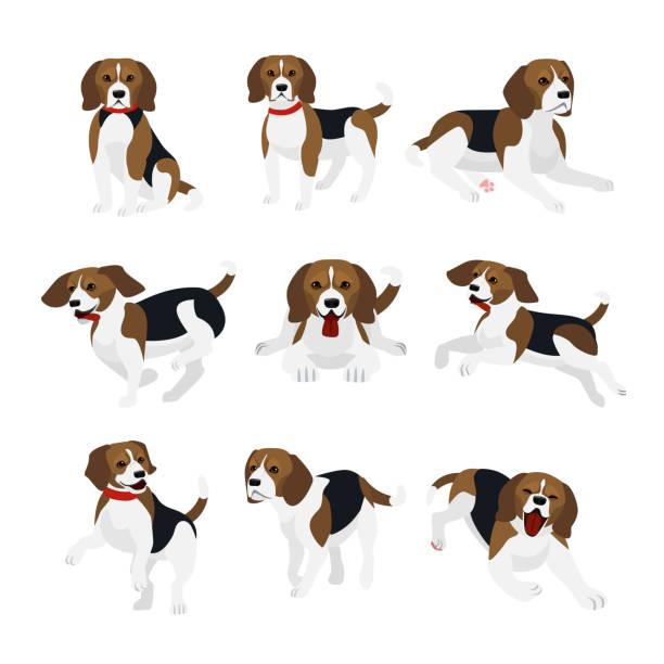 Best Beagle Illustrations, Royalty.
