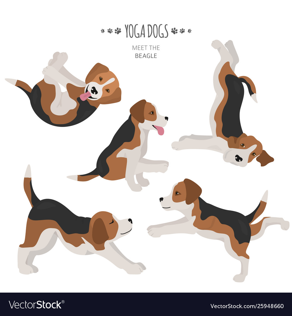 Yoga dogs poses and exercises beagle clipart vector image.
