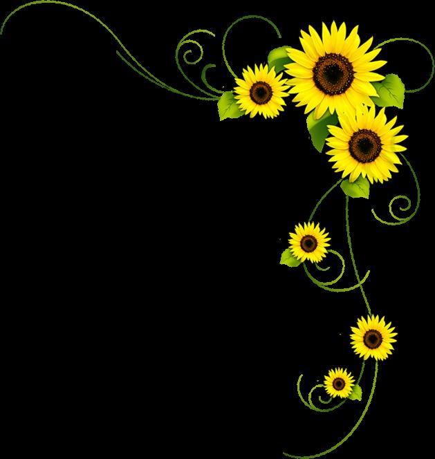 Beautiful Flowers Background Decoration, Beautiful, Flowers.