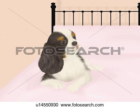Stock Illustrations of Cavalier King Charles Spaniel lying on bed.