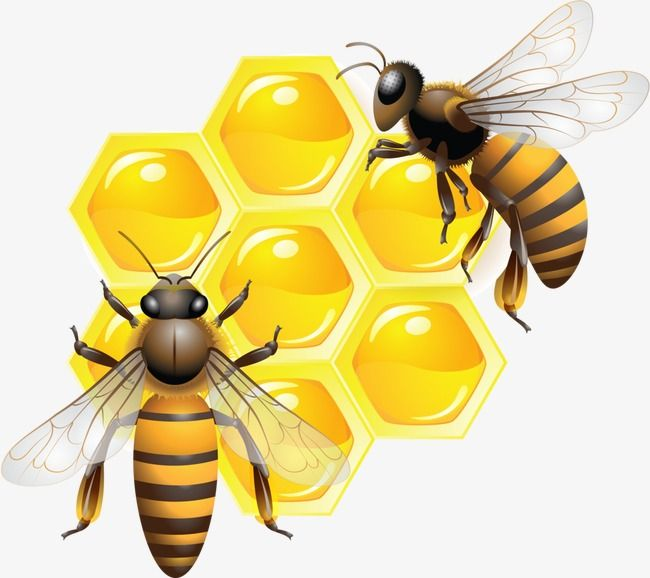 Bee, Bee Clipart, Honey Bees, Honey PNG Transparent Clipart.
