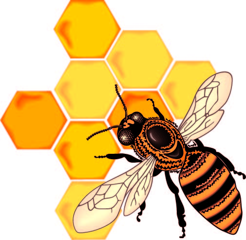 Clipart Bees Honeycomb Image.