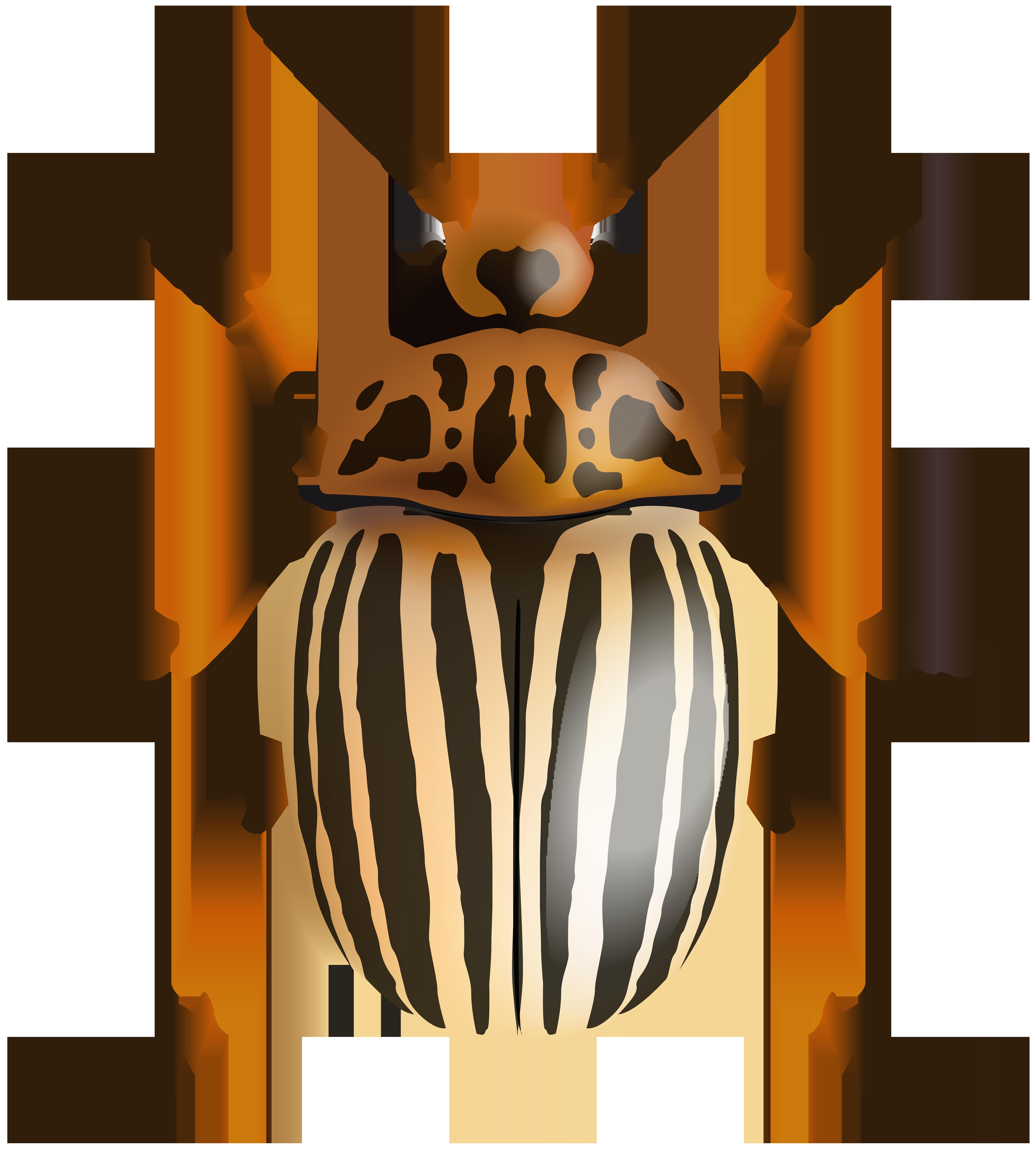 Beetle PNG Clip Art Image.