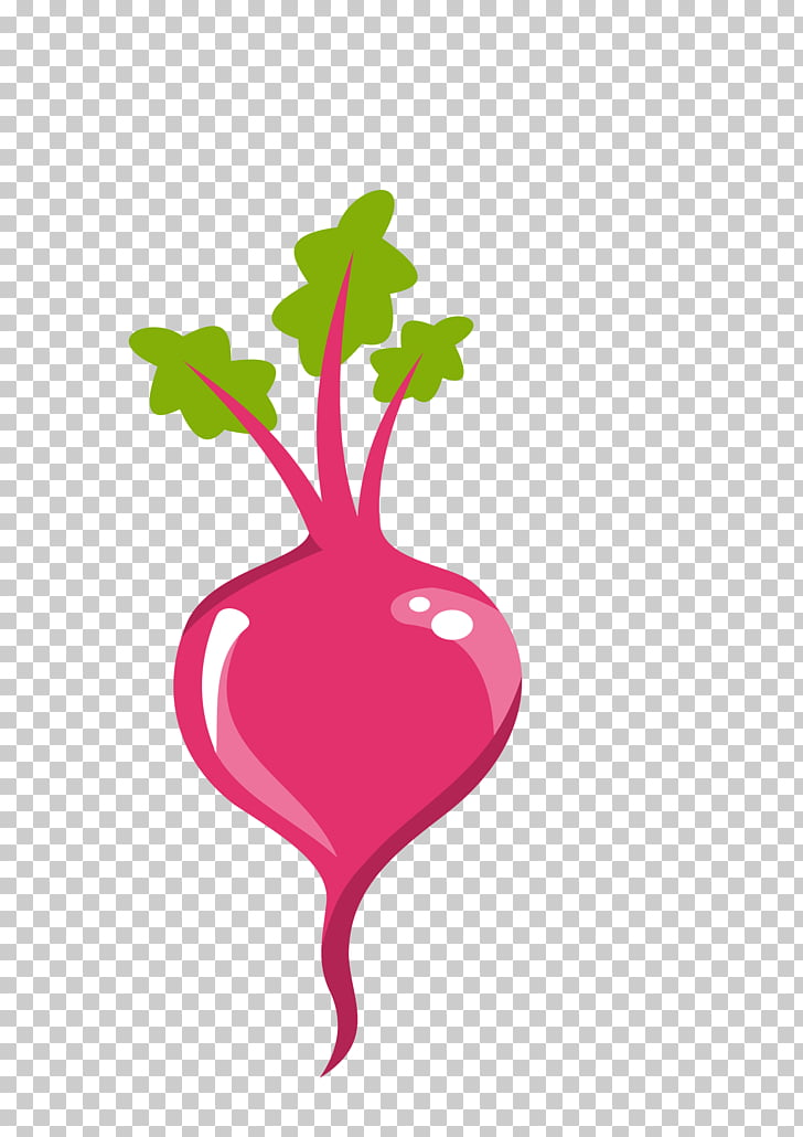 Sugar beet Beetroot , beet PNG clipart.