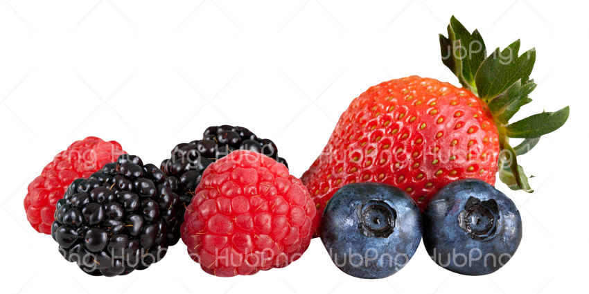 Berries png HD clipart Transparent Background Image for Free.