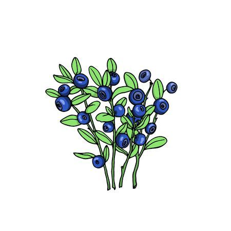 Berry bush clipart 1 » Clipart Portal.