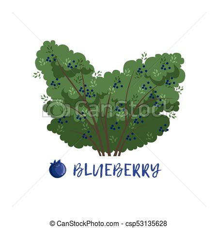 Blueberry berry bush with name vector Illustration.
