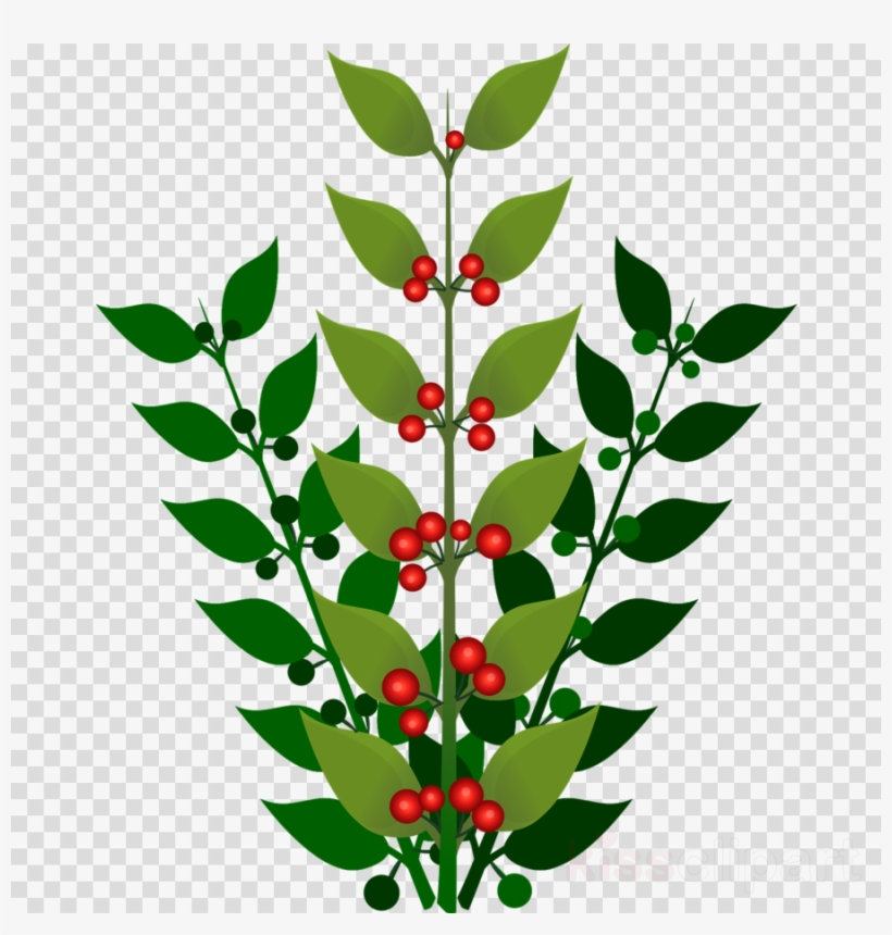Clip Art Berry Bush Png Clipart Blueberry Berries Clip.