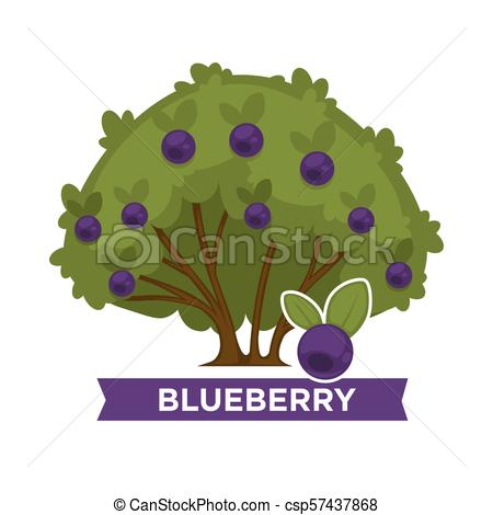 Thick blueberry bush with ripe healthy fruits all over.