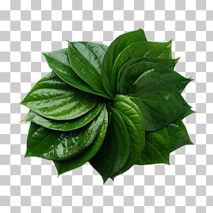 26 betel Nut PNG cliparts for free download.