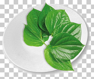 20 betel Leaf PNG cliparts for free download.