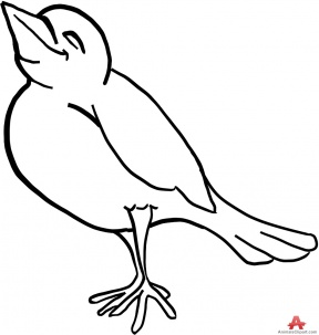Bird Outline Clipart.