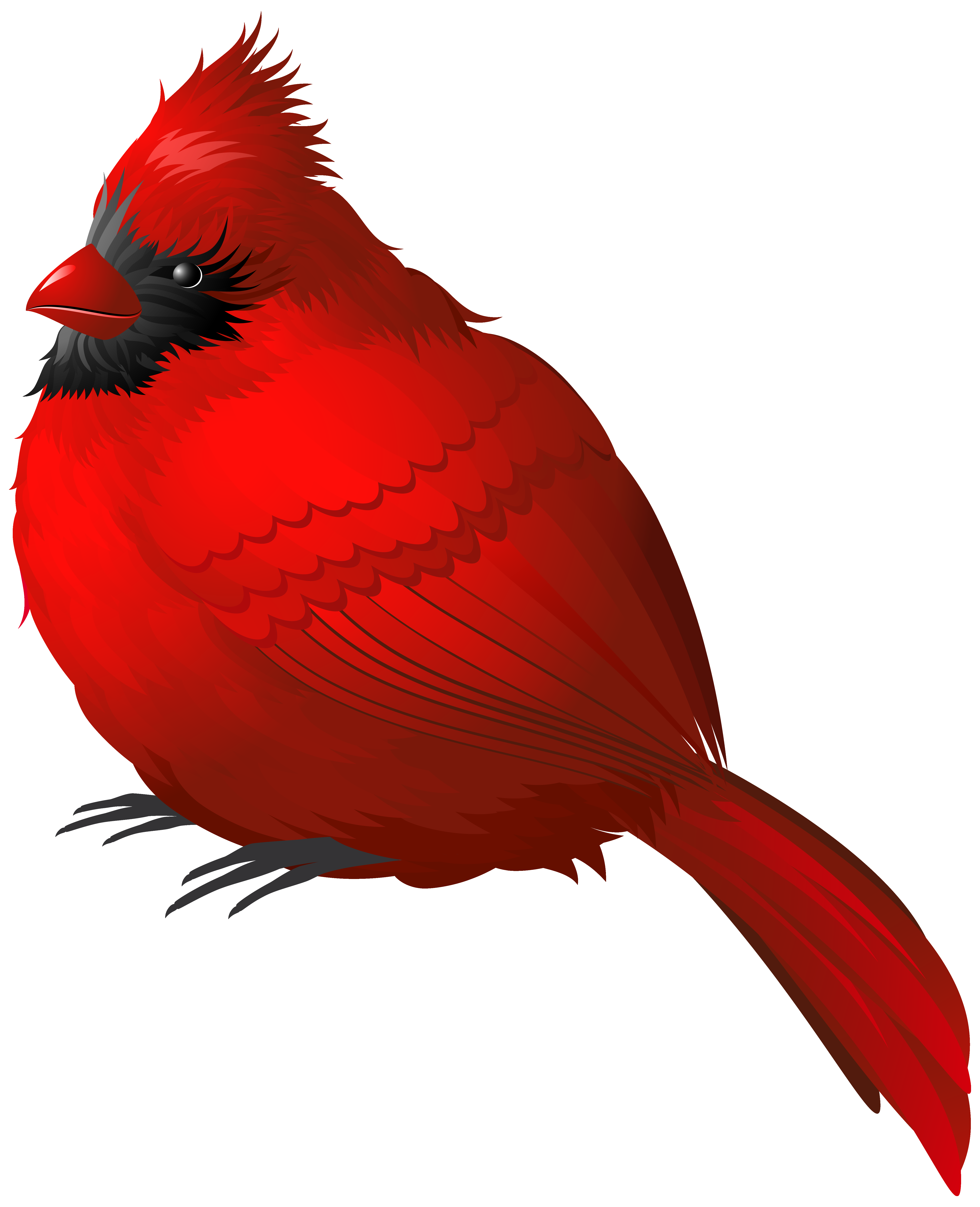 Red Winter Bird PNG Clipart Image.