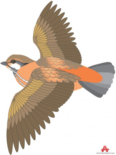 Animals Clipart of bird.
