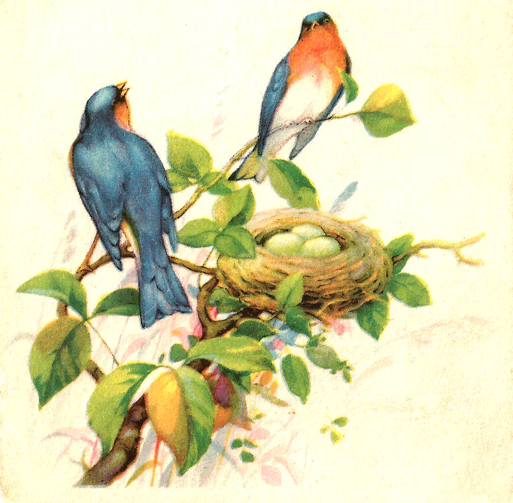 Antique Images: Free Bird Clip Art: 2 Birds in a Tree with Nest.