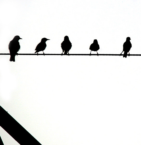 clipart of black birds on wire.