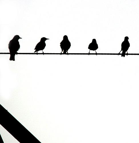 bird on a wire full movie free online