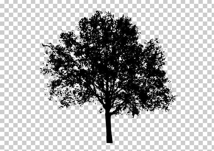 Tree PNG, Clipart, Bitmap, Black And White, Branch, Clip Art.
