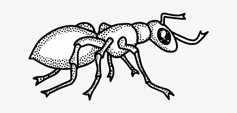 Ants Clipart Png.