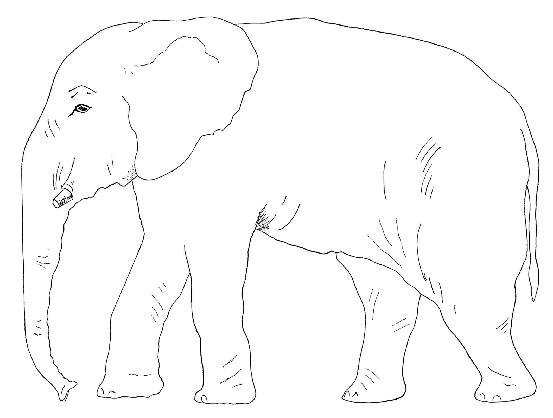 elephant clipart, old book page, vintage party game, counting the.