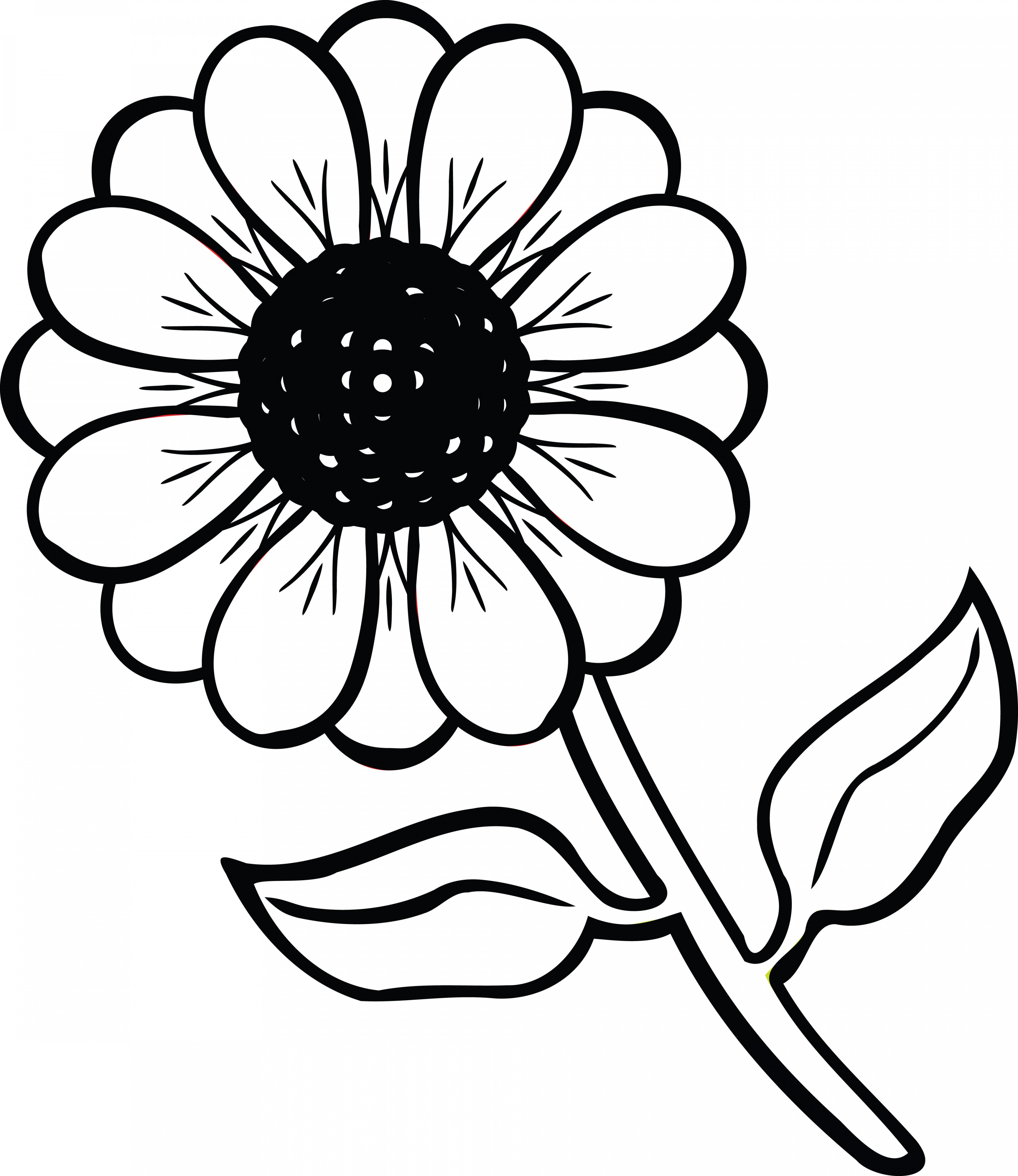 Black And White Clipart Flowers.