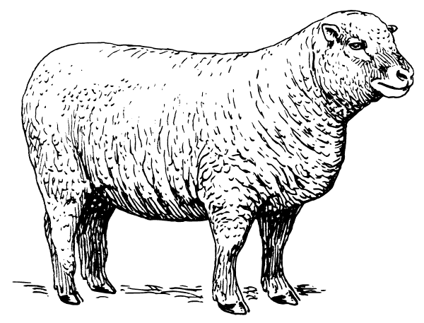 Free Black and White Sheep Clipart, 1 page of Public Domain Clip Art.
