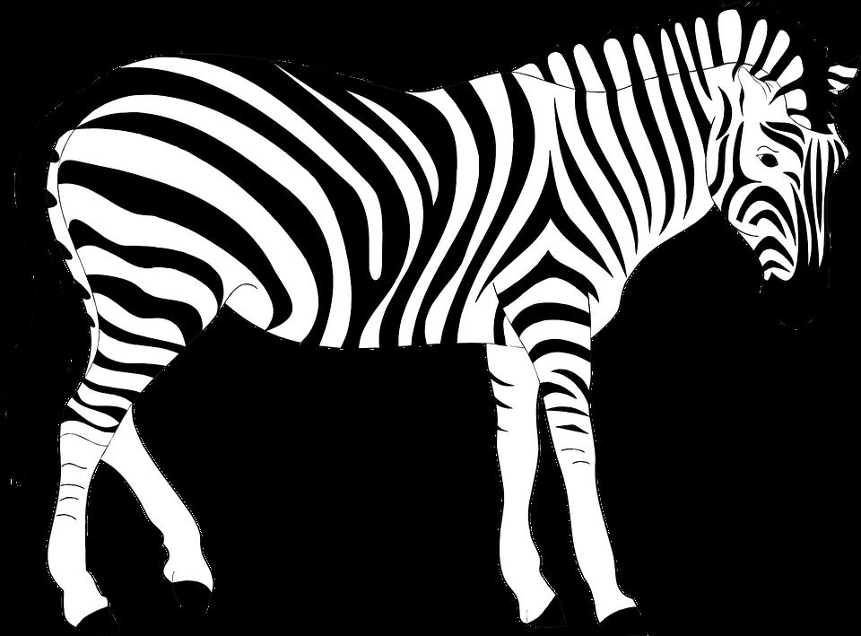Free Zebra Clipart Black And White, Download Free Clip Art.