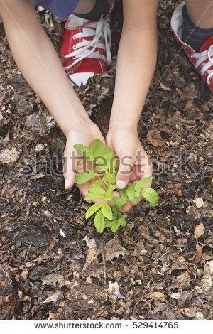 Black Locust Tree Stock Images, Royalty.